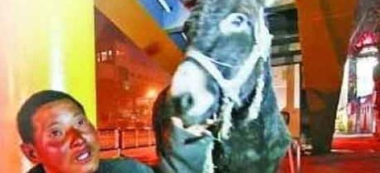Chinese Man Zhuang walking 2400 kilometers with donkey