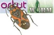 Orkut Worm Bom Sabado