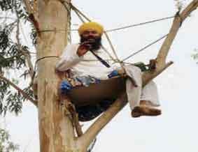 Punjab Politician Climbs Tree