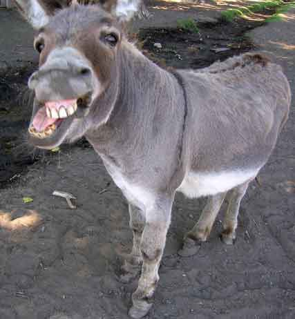 Taliban Fighter Donkey Sex