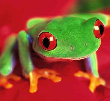 Frog Eaters Arrested