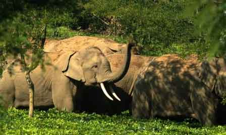 Elephants in Mysore go Wild