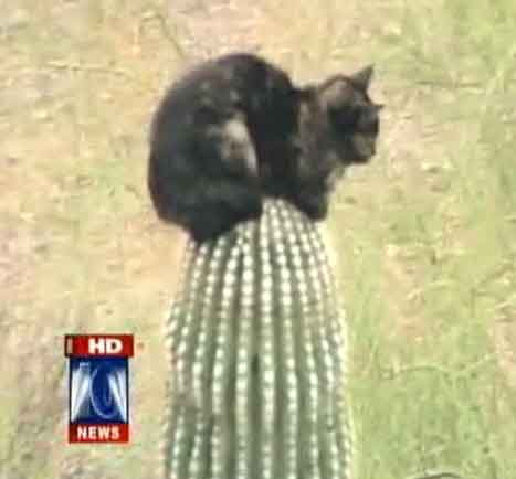 Cat on Cactus Tree