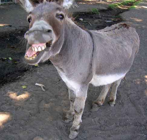 Detective Donkey