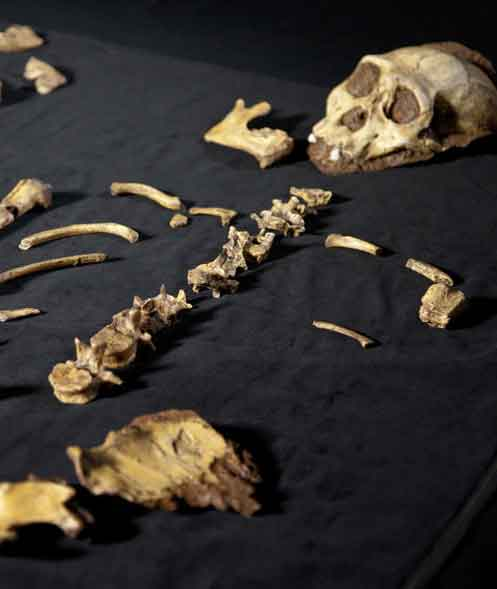 Ancient Human Skeletons