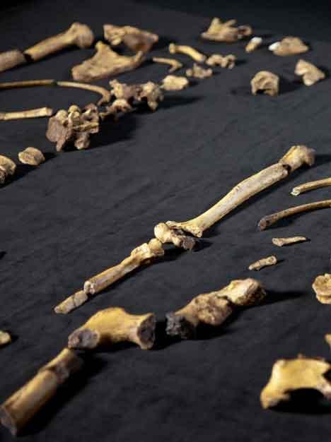 South Africa Skeletons